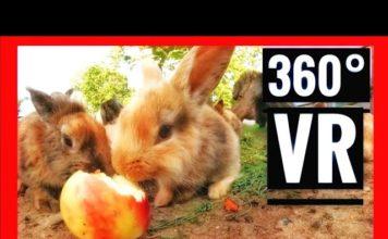 360 VR Videos Cute Bunnies