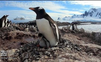Go Inside a Penguin Colony in Antarctica